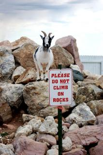 funny_sign_goat_wtf_signs-s333x500-.jpg